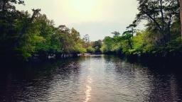 The Altamaha River, GA