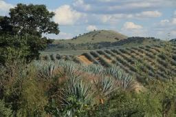 Tequila, Jalisco to Rincón de Guayabitos, Nayarit